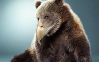 685x428xdes-ours-avec-des-becs-2.jpg.pagespeed.ic.SFBhss_dYe