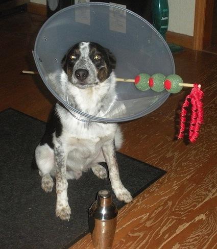 dog-martini