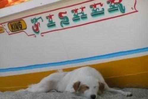 dog_sleeping[1]