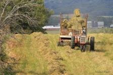 haying 2