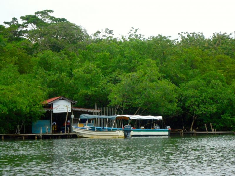 Water Taxi in Bocas