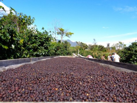Panama Coffee Farm 12