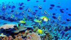 Reef mit Fisch