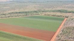 Mango Plantage