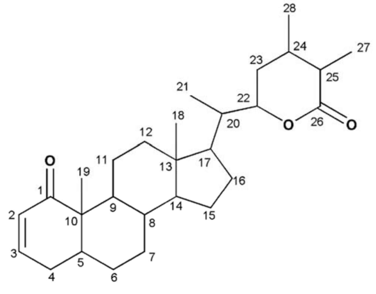 T Bio Supplement