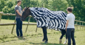 Scientists Dressed Horses Up Like Zebras to Determine the Purpose of Stripes