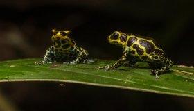 Scientists Identify Gene Pattern That Makes Some Animals Monogamous image