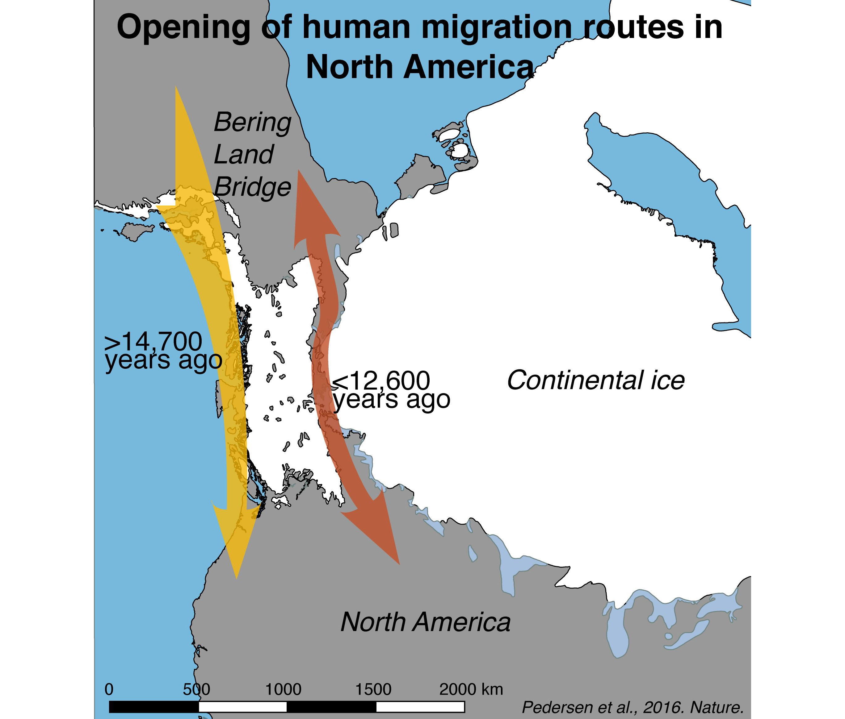 First Humans Entered The Americas Along The Coast Not