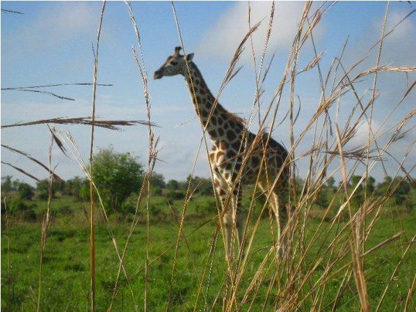 Murchison Falls National Park (Uganda)