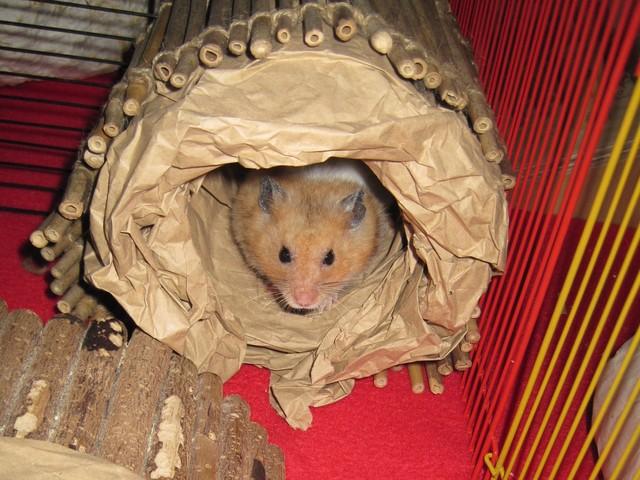 Hamster im Packpapier