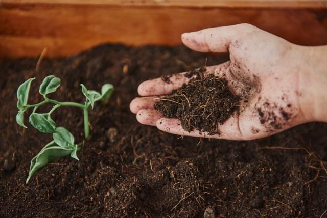 Gardener with soil