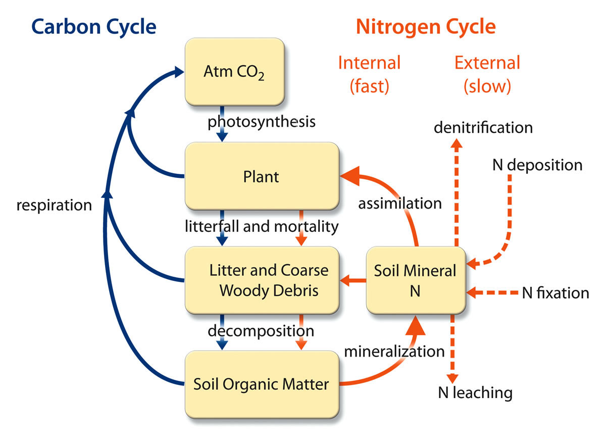 Image Coupling Of The Carbon And Nitrogen Cycles