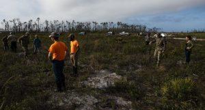 Deforestation on Tyndall AFB leads to ecosystem restoration