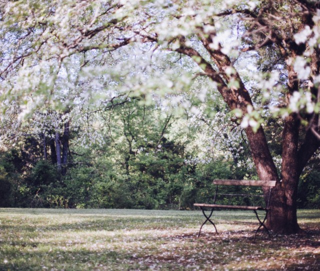 Public Domain Images Spring Time Tree White Blossoms Wooden Bench Outdoors