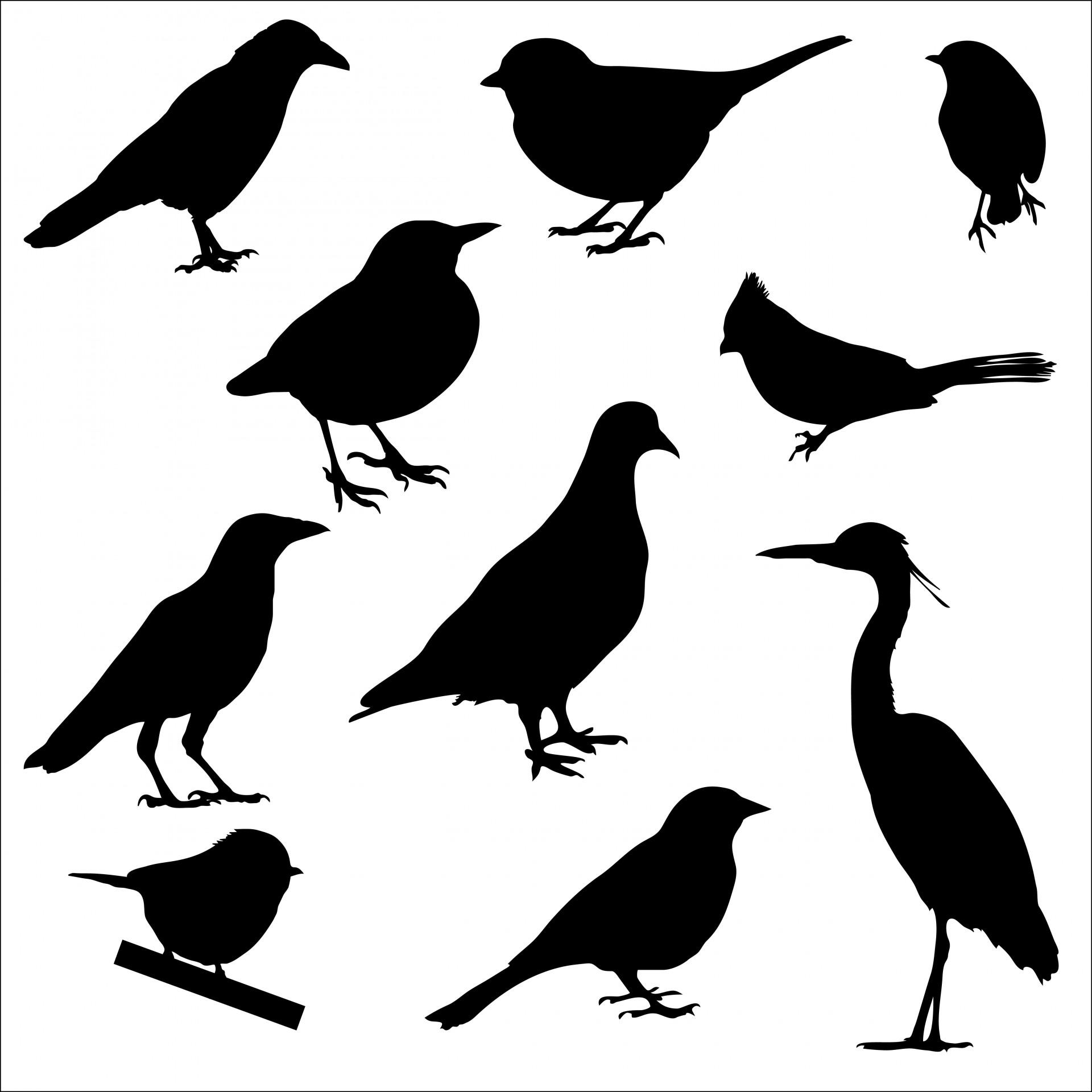 Bird Silhouettes Free Stock Photo