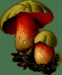 78 Jamur Clipart Gratis Domain Publik Vektor