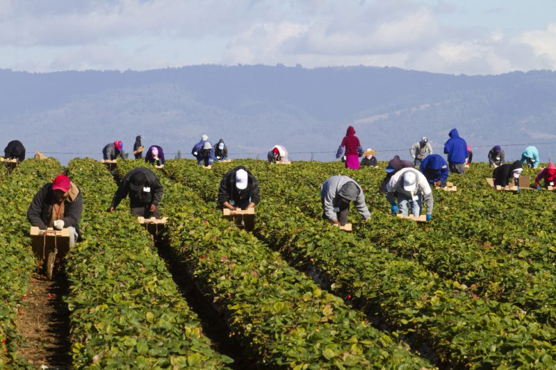 Guest opinion: We must assure the health of farmworkers