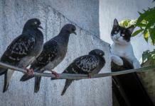 O Gato e a Rolinha ou o Corretor e o Cliente