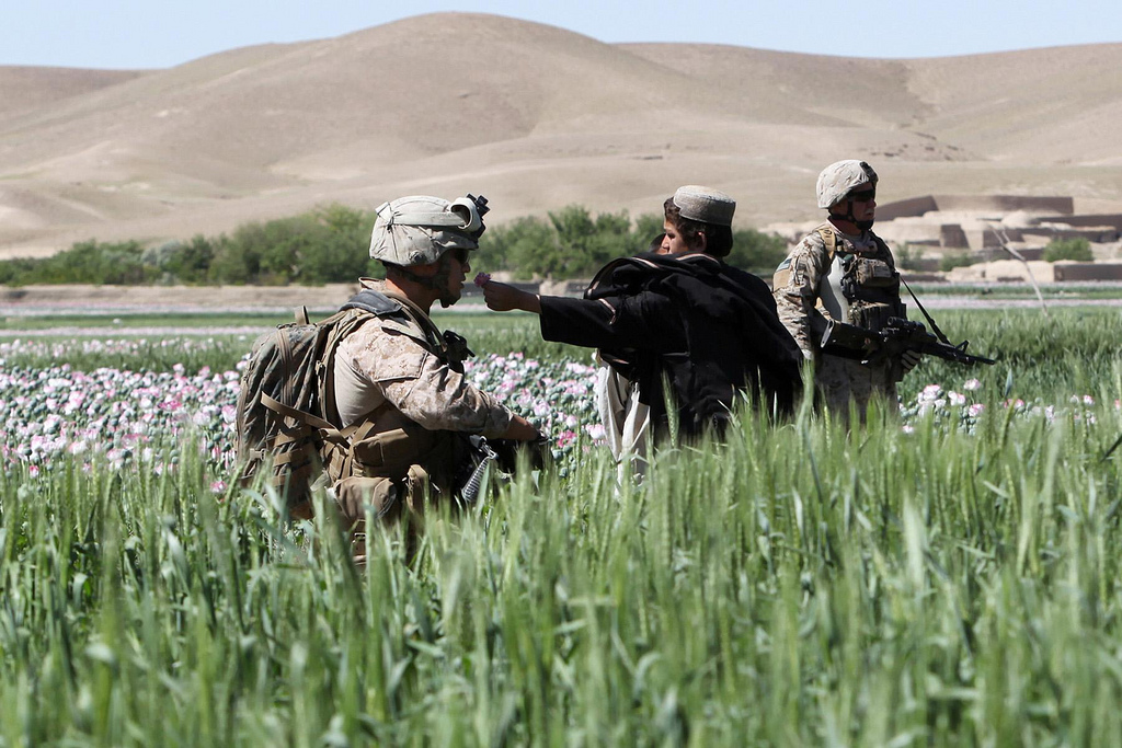 U.S. Occupation Leads to All Time High Afghan Opium Production USNATO poppies17