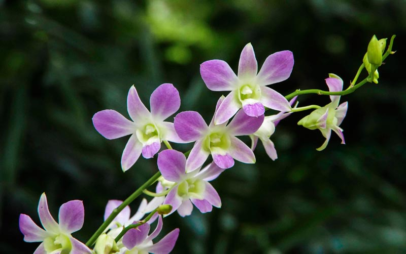 potted orchid7_