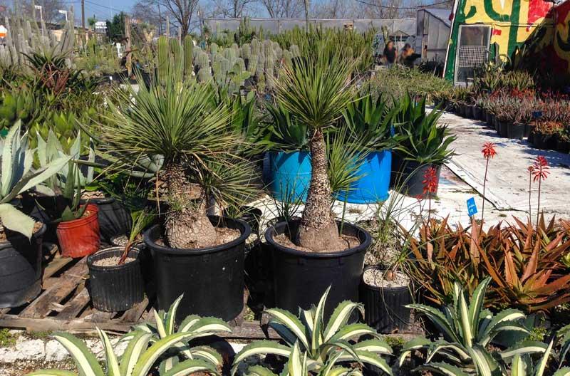 search succulents_
