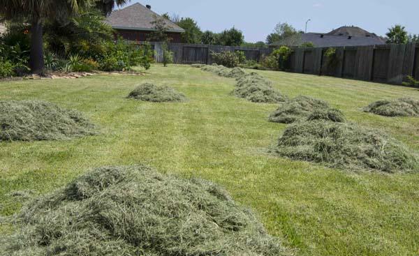 Summerchallenges lawn_