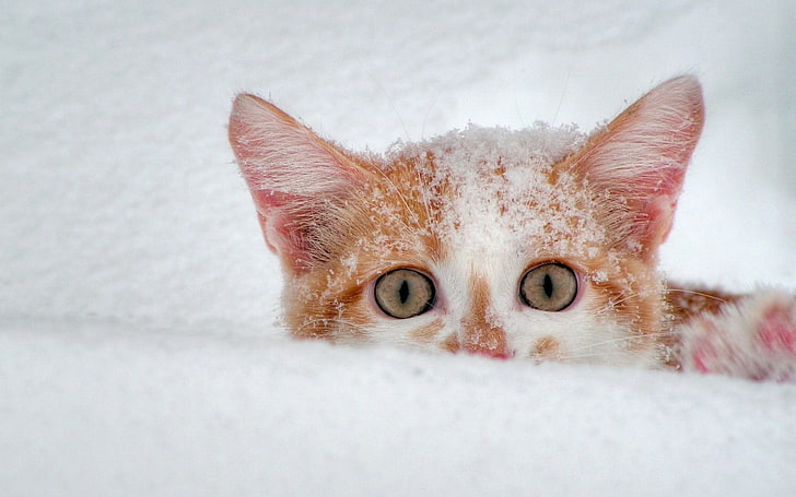 How to Keep a Stray Cat Warm Outside in Winter