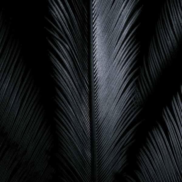gray shiny feathers on black background