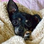 Tu mascota también tiene frío: 7 tips para cuidarla