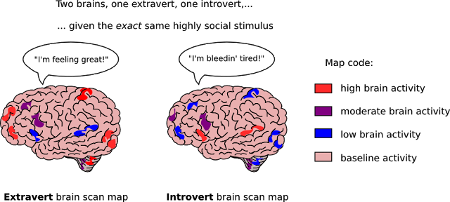 Brain of introverts va. extroverts