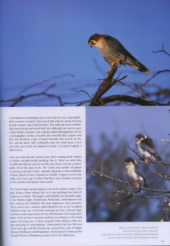 red-necked_falcon_and_pygmy_falcon