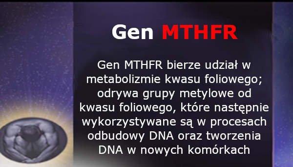 Transformacja epigenetyczna -gen MTHFR