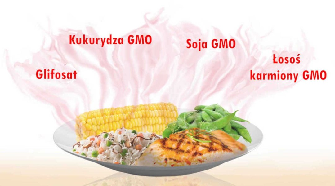 Sekretne składniki-Glifosat-Kukurydza GMO-Soja GMO