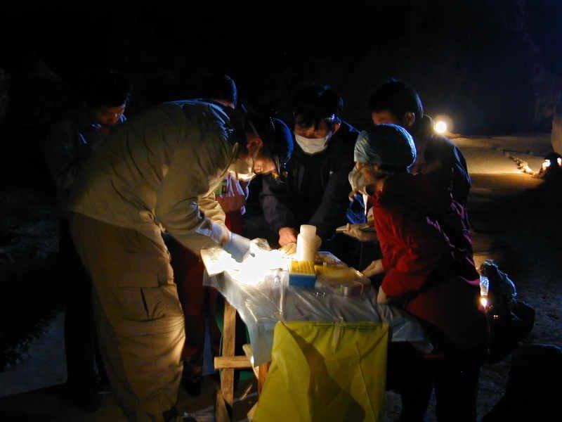 grupa badaczy przygotowała próbki krwi nietoperzy