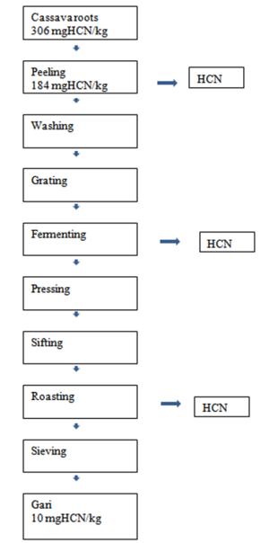 Figure 1 Process flow chart for gari production showing