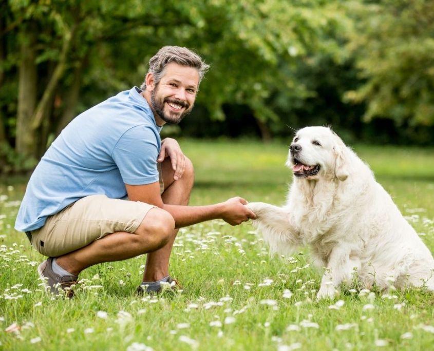 Online Kurs Hundetraining