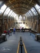 Photo - Natural History Museum