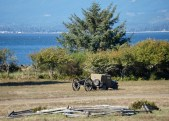 Carting away a cannon post-battle