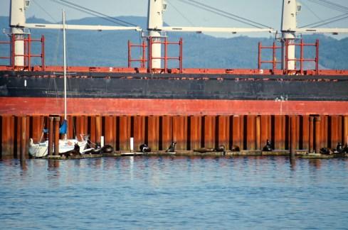 Sea Lions and Sailboat