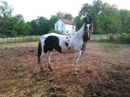 Reign at Charming Acres Rescue