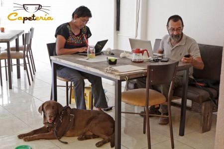 Capetería, primera cafetería pet friendly en Puebla