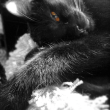 Black and white of my cat Moss, color focus on his eye