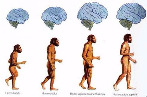brain-shrinking-humans