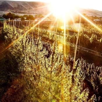 Puffin Farm Sun+Earth Certification