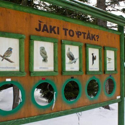 i proszę- kto się pochwali znajomością ptaków rodzimych?? ja sie niestety andal ograniczam do sikorek, bocianów i wróbli :/