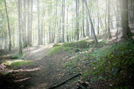 W takich pofalowanych okolicznościach terenowych też dreptaliśmy. Duży plus przy bardzo ciepłym dniu - większość trasy wytyczyliśmy przez las.