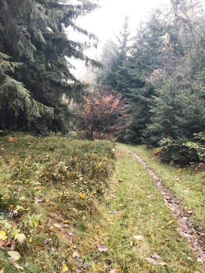Takimi ścieżkami wędrowaliśmi idąć z Głuszycy do Janovicek przez Czarnoch...