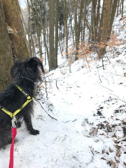 fajne zejście. śnieg, liście , luźne kamienie a wszystko to okraszone wielkimi placami lodu. Bu : YEAH!
