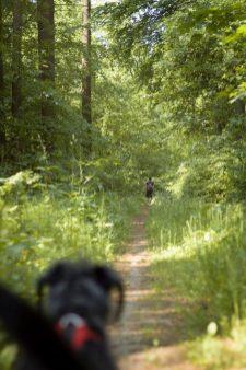 sporo ściezek leśnych...
