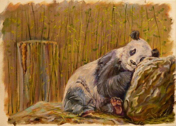 сонная панда этюд